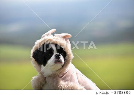 コートを着た犬 8788306