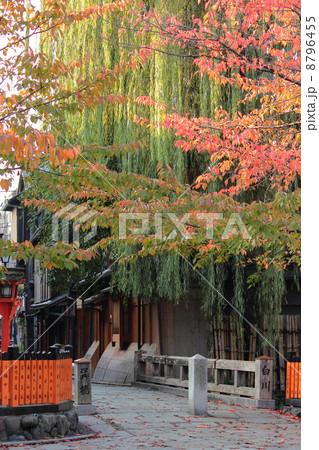 京都 祇園白川 秋の風景 8796455