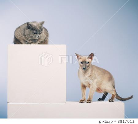 Two Catsの写真素材 [8817013] - PIXTA