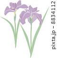 あやめ 菖蒲 花のイラスト 8834112