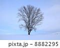 北海道・美瑛 「哲学の木」 8882295