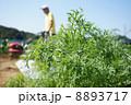家庭菜園のニンジン 8893717