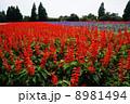 くじゅう花公園 8981494