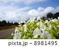 くじゅう花公園 8981495