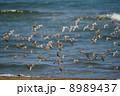 渡り鳥の群れ 8989437
