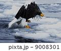 飛ぶ 野鳥 鳥の写真 9008301