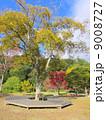 三木山森林公園 榎(えのき) 9008727