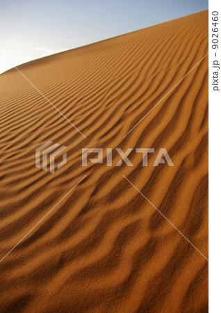 サハラ砂漠の風紋 9026460