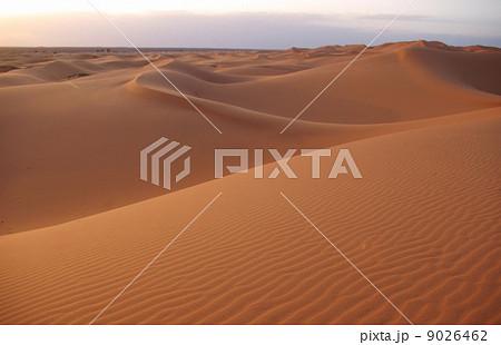 サハラ砂漠 9026462