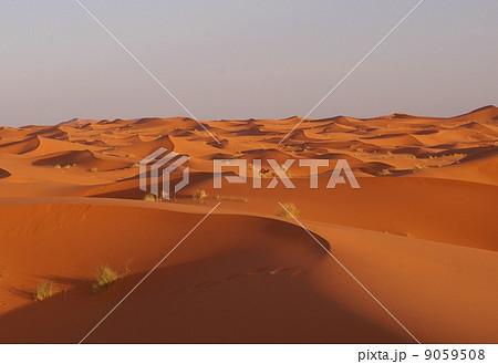 サハラ砂漠 9059508