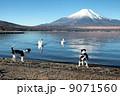 富士山と鳥と犬 9071560