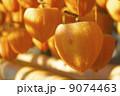 柿 干し柿 吊るし柿の写真 9074463