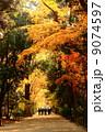 秋の林道を歩く人々 9074597