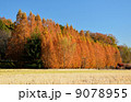 並木 メタセコイア 紅葉の写真 9078955