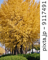 イチョウ 公孫樹 並木の写真 9117491