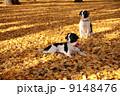紅葉と犬 9148476
