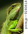 イグアナ 褐色 緑の写真 9280618