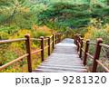 森林 林 森の写真 9281320