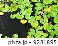 ウォーター 水 水分の写真 9281895