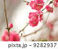 咲く 開花 きれいの写真 9282937