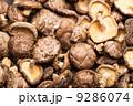 きのこ キノコ 茸の写真 9286074