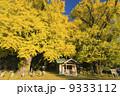 イチョウ 神社 紅葉の写真 9333112