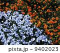 ビオラ ヴィオラ 花の写真 9402023