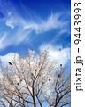 巣 枝 樹木の写真 9443993
