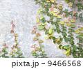 セメント 表面 石工の写真 9466568