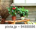 庭 園芸 育つの写真 9488886