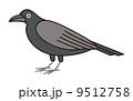 鴉 鳥 鳥類のイラスト 9512758