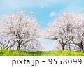 日本の春の風景 9558099
