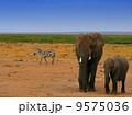Elephants in the wild 9575036