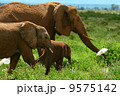 Family of elephants in the wild 9575142