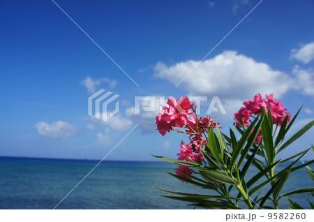 カリブ海と花 9582260