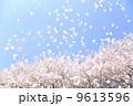 桜吹雪 9613596
