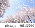桜吹雪 9613599