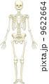 人体骨格(前面) 9622664