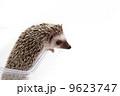 ハリネズミ 9623747