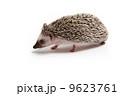 ハリネズミ 9623761