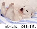 仔犬 犬 動物の写真 9634561