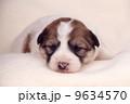 かわいい仔犬 9634570