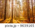 秋 並木道 きれいの写真 9639165