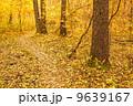 秋 並木道 きれいの写真 9639167