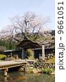 朝倉遺跡の唐門と桜 9661051