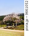 朝倉遺跡の春・桜 9661052