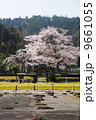 朝倉遺跡の春・桜 9661055