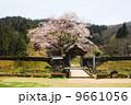 朝倉遺跡の春・桜 9661056