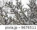 積雪 梅 白梅の写真 9676511