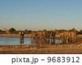 エトーシャ国立公園のゾウとキリン 9683912